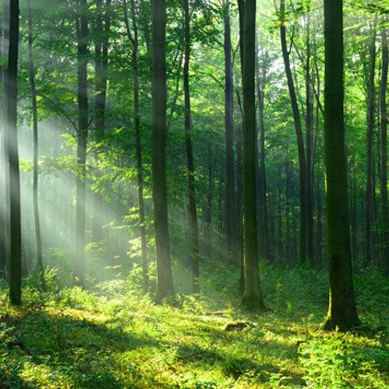 Le bio-ethanol permet de lutter contre la deforestation