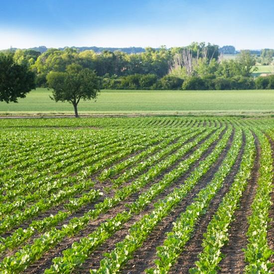 Semaine du développement durable : le point de Pur-Ethanol